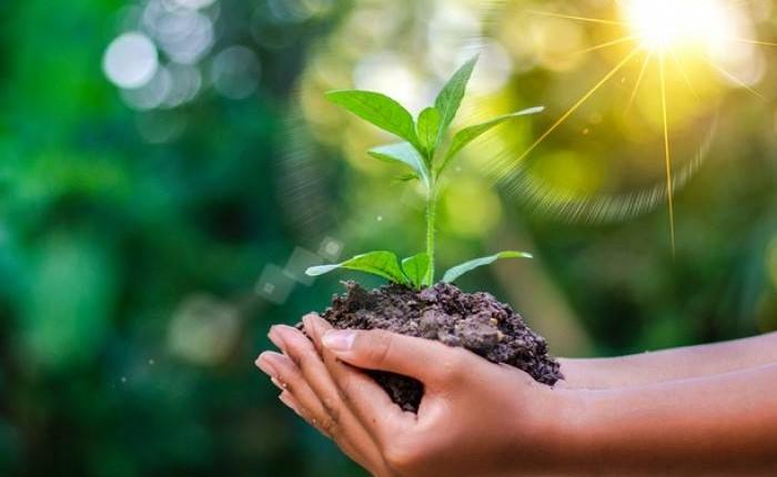 ЗВІТ  ПРО СТРАТЕГІЧНУ ЕКОЛОГІЧНУ ОЦІНКУ СТРАТЕГІЇ ТА ПРОГРАМИ екологічного розвитку майбутньої  Торецької територіальної громади